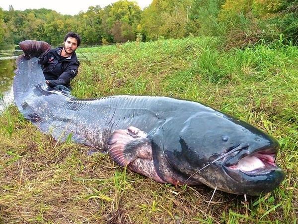 Sosyal medyayı sallayan balıklar