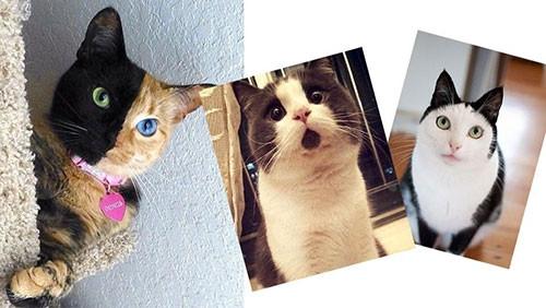 Eşi benzeri olmayan kediler