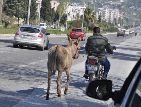 Aydın'da eşeğe motosikletli eziyet