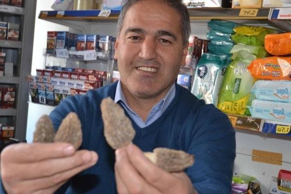 Köylünün yeni gelir kaynağı: Kuzu göbeği mantarı