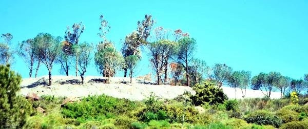 İnşaat Firması,kuruyan Ağaçları Yeşile Boyadı