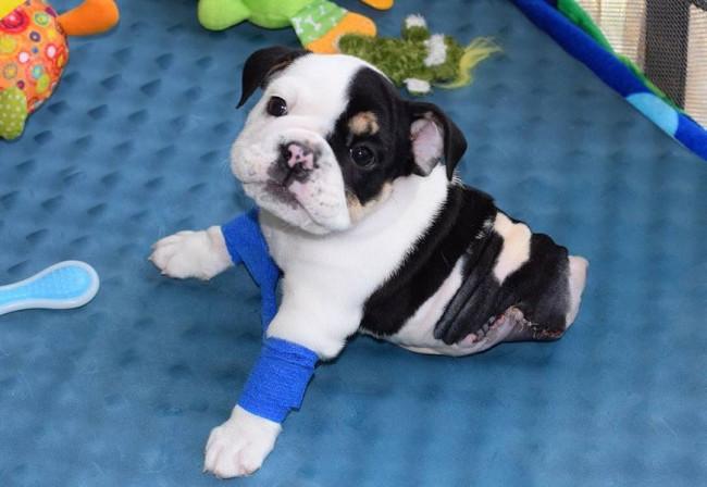 Minik köpeğin yürek burkan hikayesi