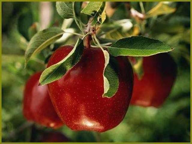 Besinlerin müthiş faydaları