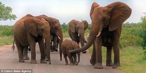 Anne fil ile yavru fil hayretler içinde bıraktı