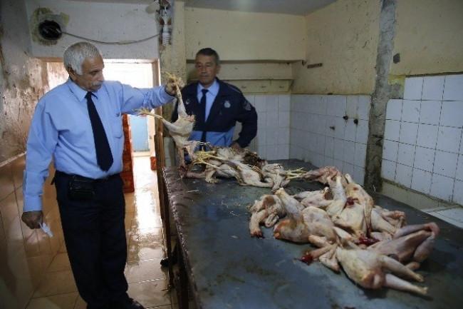 Kaçak tavuk operasyonunda mide bulandıran görüntü