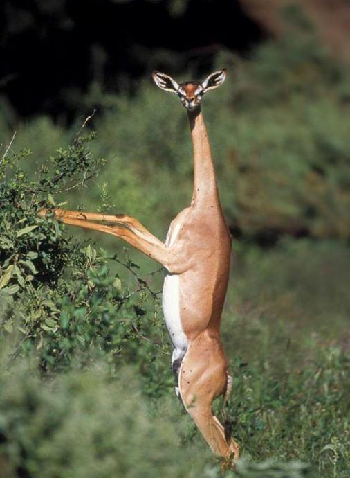 Dünyanın en garip 10 hayvanı!