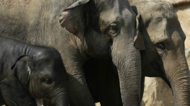 Kansere yakalanmayan gizemli hayvan türleri