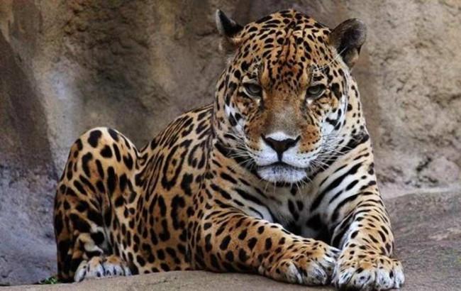 En çok insan öldüren hayvanlar