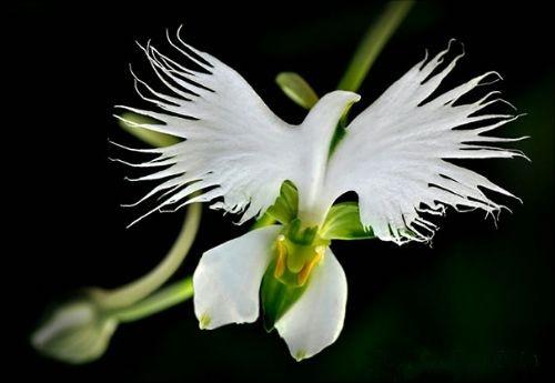 Şimdiye kadar görmediğiniz en çarpıcı çiçekler