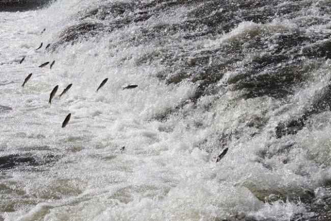 Uçan balıklarla görsel şölen