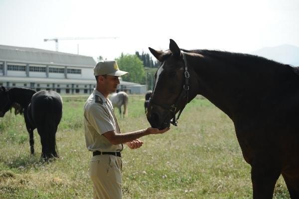 TSK'nın atları böyle eğitiliyor