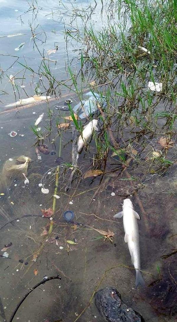 Rafting cenneti Köprüçay'da balık ölümleri