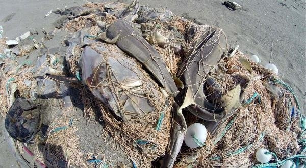 Tarsus sahilinde ağ faciası