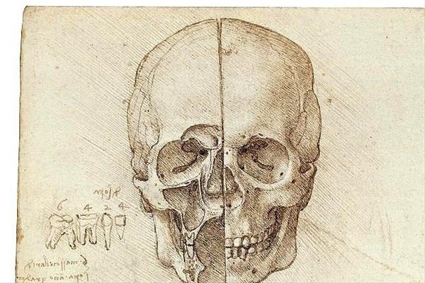 Da Vinci'nin 'vücut'ları sergilenecek