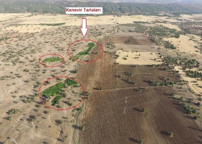 Kamu arazisindeki 8.5 milyon liralık kenevir imha edildi