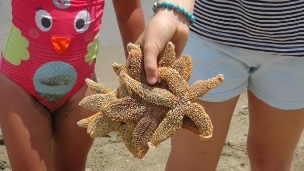 Tekirdağ'da yüzlerce deniz yıldızı kıyaya vurdu