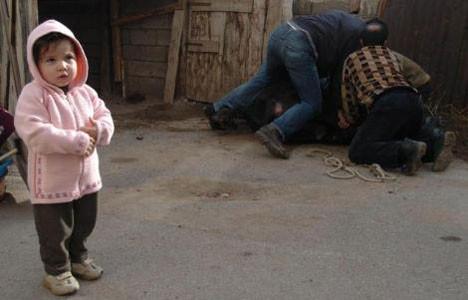 Türkiyeden kurban manzaraları