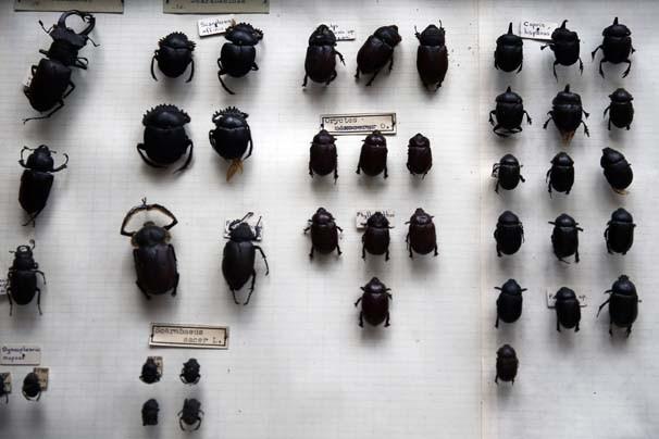 Emekli profesör 45 yıl boyunca 25 bin böcek topladı !
