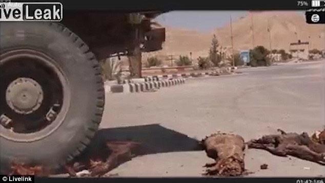 IŞİD mumyaları kamyonla ezmiş !