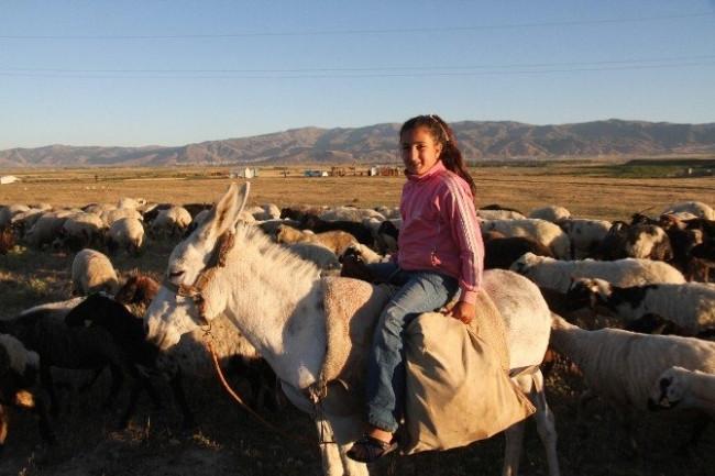 4 bin TL maaşla çoban aranıyor