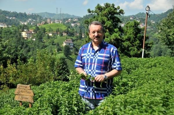 Stevia bitkisi artık Rize'de yetiştiriliyor