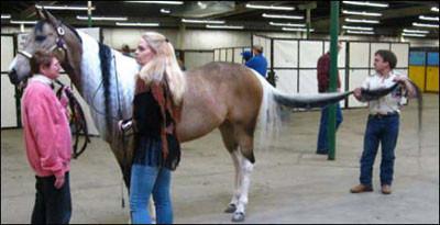 Dünyanın en uzun kuyruklu atı