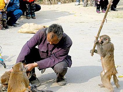 Maymun bakıcısını dövdü !
