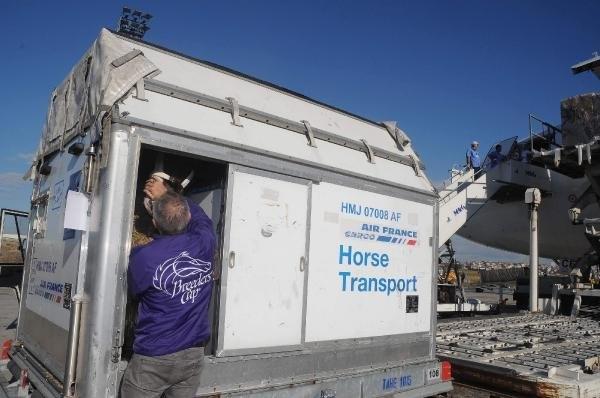 Milyon dolarlık atlar uçakla geldi