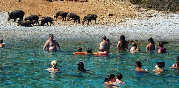 Tatilciler Bodrum'da korkudan sahile çıkamadı