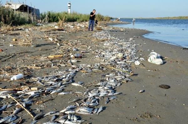 Mersin'de onbinlerce balık sahile vurdu