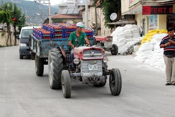 Köydeki kooperatif, 30 milyonluk domates satıyor !
