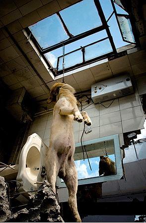 National Geographic 2008in en iyi fotoğrafları