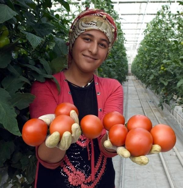 Türkiye'de bir ilk ! Eksi 46 derecede seracılık