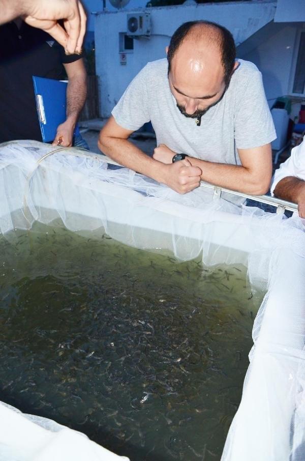 Muğla'da ''panga'' üretimine başladılar
