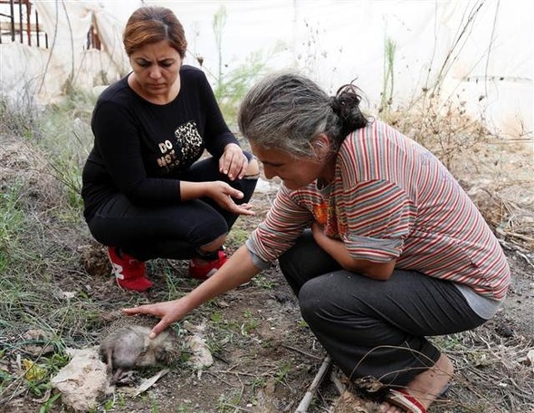 Antalya'da hayvanseverler gözyaşına boğuldu