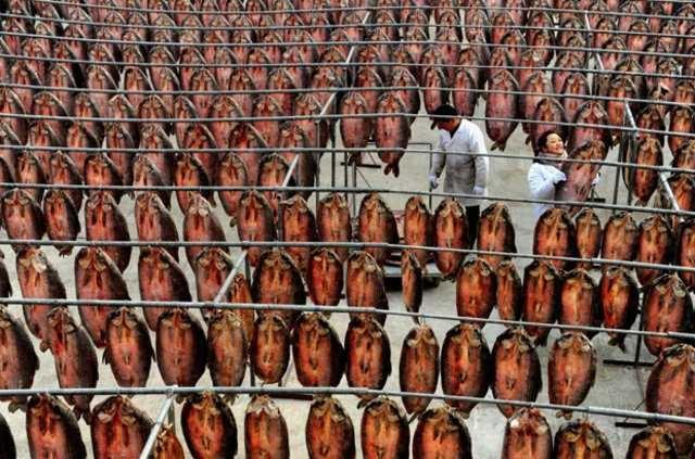 1.4 milyar insanı böyle doyuruyorlar!...