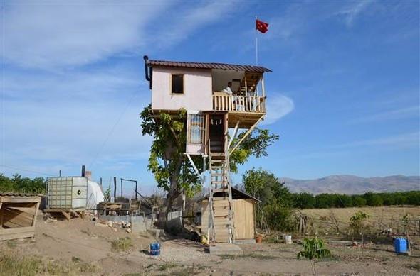 Ceviz ağacına iki katlı ev yaptı