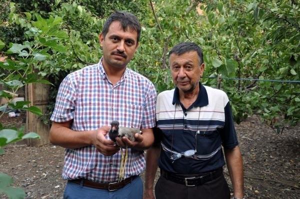 Türkiye'de Nadir Görülen Kuşu Vurdular