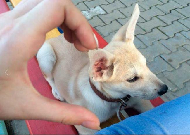 Sokak hayvanlarına işkence yapan kadın tutuklandı