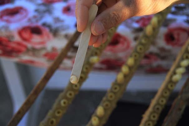 Arı sütünün 10 gramı 250 TL