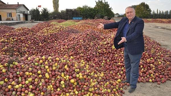 Elma üreticileri zorda ! Ağaçlar sökülüyor...