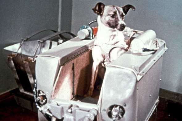 Uzaya yollanan hayvanlar