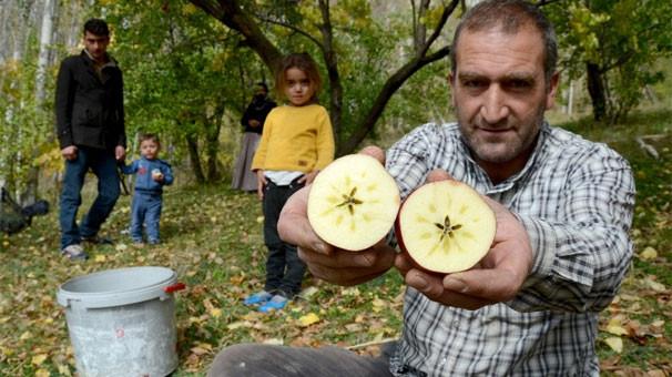 Kırmızı yıldız elması devletten destek bekliyor