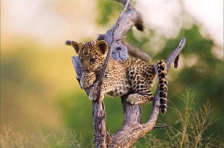 Vahşi doğanın ödüllü fotoğrafları