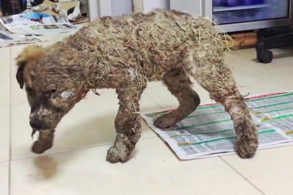 Köpeği tutkala bulayarak ölüme terk ettiler