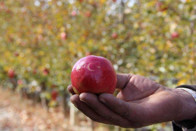 'Ay yıldızlı' elmalara talep çokluğu