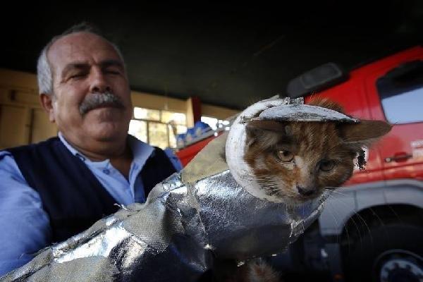 Tuvalet kapağına sıkışan kediyi itfaiye kurtardı