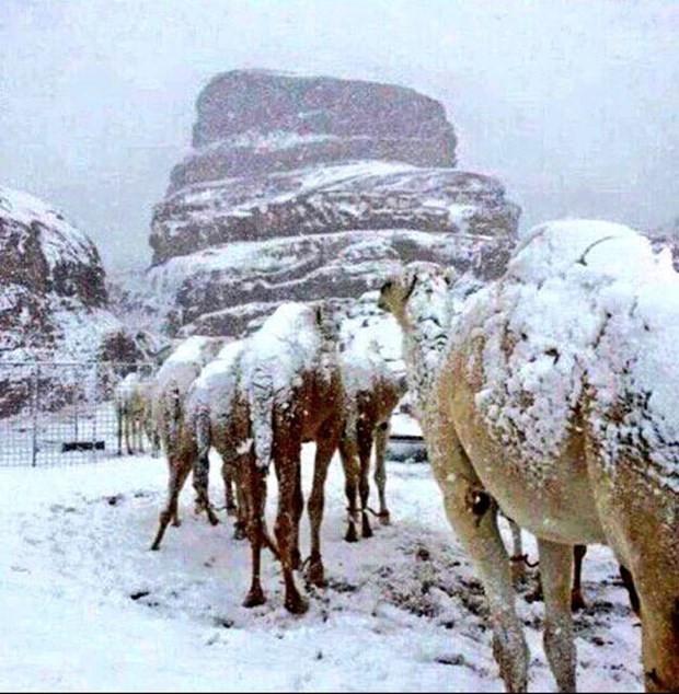 Suudi Arabistan'da çöle aniden kar yağdı