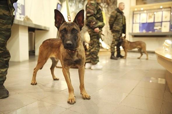 Putin'in ordusuna klonlanmış köpekler geliyor