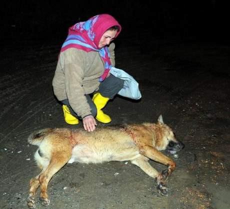 Silahıyla köpeği vurdu !